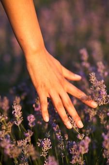 Frauenhand, die lavendel berührt und natur fühlt