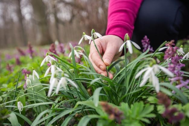 Frauenhand, die sehr seltene blumen im nationalpark oder im botanischen garten aufhebt oder erntet, umweltkonzept