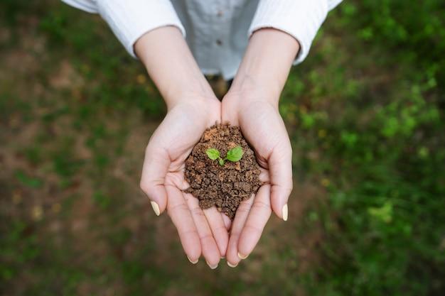 Frauenhand, die sprosspflanze, keimlingspflanze im boden hält. draufsicht.