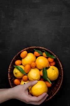 Frauenhand, die zitrone im korb voller zitronen und kumquats auf schwarzer oberfläche hält