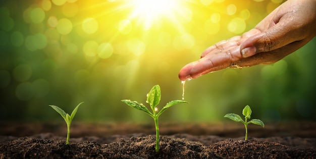 Frauenhand, die zum natürlichen hintergrund der jungpflanze wässert