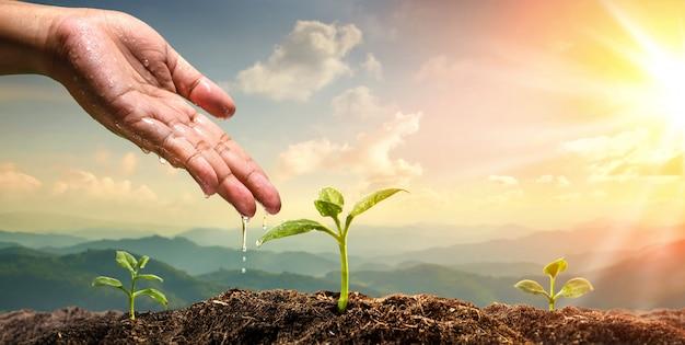 Frauenhand, die zur jungpflanze auf natürlichem gebirgshintergrund wässert