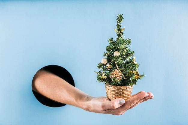 Frauenhand hält einen kleinen weihnachtsbaum aus einem schwarzen loch in einer blauen papierwand.