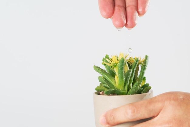 Frauenhand lassen das wasser zum kleinen baum oder zum kaktus fallen