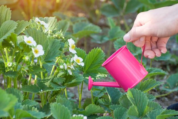 Frauenhand mit einer kleinen rosa gießkanne.
