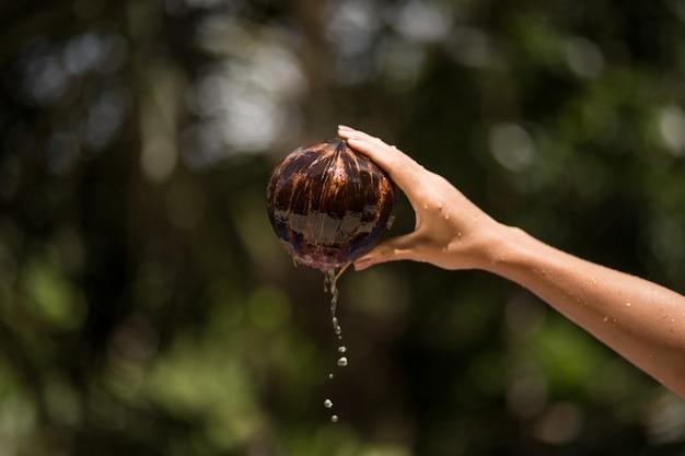 Frauenhand zog kokosnuss vom wasser aus
