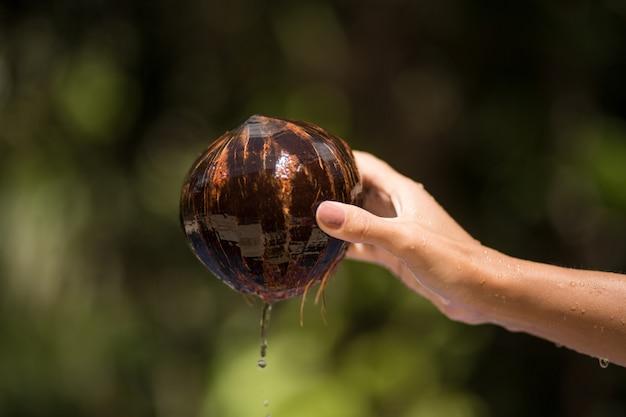 Frauenhand zog kokosnuss vom wasser aus.