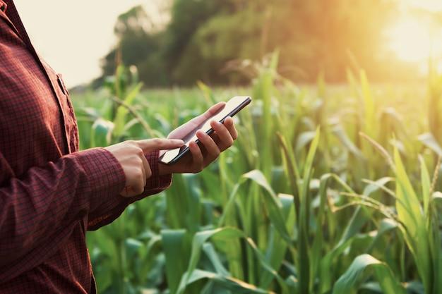Frauenlandwirt, der technologiemobile auf dem maisgebiet verwendet