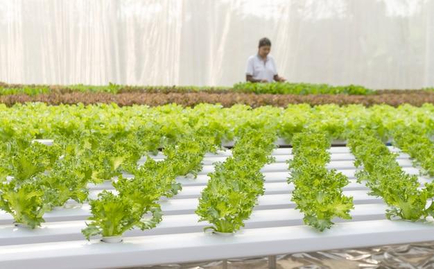 Frauenlandwirt im gemüsehydroponikbauernhof