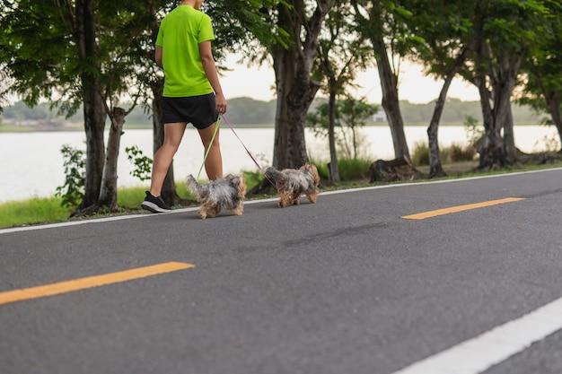 Frauenübung, die mit ihren kleinen hunden auf der straße im park geht.