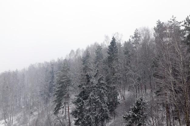 Frei in der wintersaison vor dem hintergrund fallender schneeflocken, schlechte sicht durch schneefall
