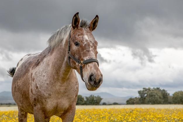 Freies pferd in einer blütenwiese
