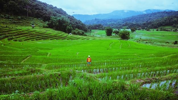 Freiheitsfrauenreisendernatur. reisen entspannen. zu fuß machen sie ein foto von reisfeldern. regenzeit in chiang mai, thailand. reiserucksack