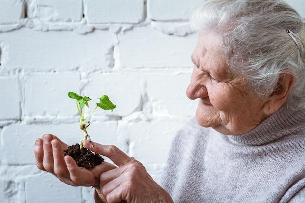 Freiwillige frauen, die das pflanzenwachsen halten