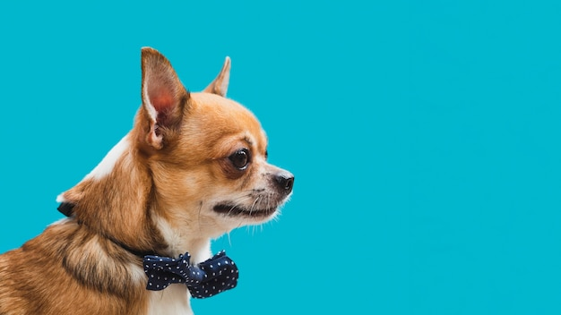 Freundlicher hund der seitenansicht mit blauem bogenkopieraum