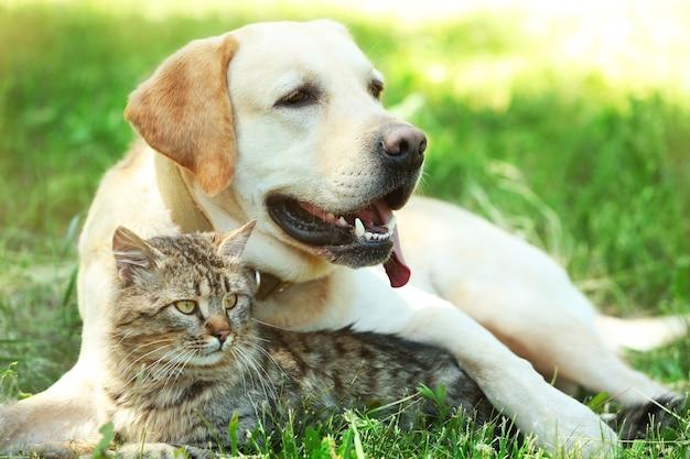 Freundlicher hund und katze, die über grünem grashintergrund ruhen