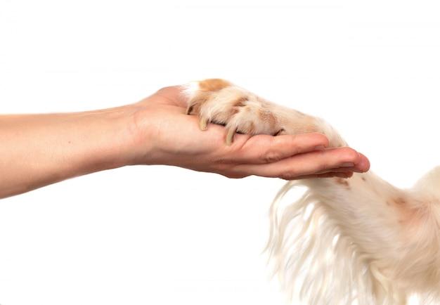 Freundschaft zwischen einem hund und seinem besitzer