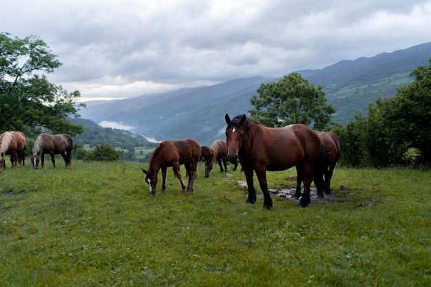 Friedliche süße pferde in der natur