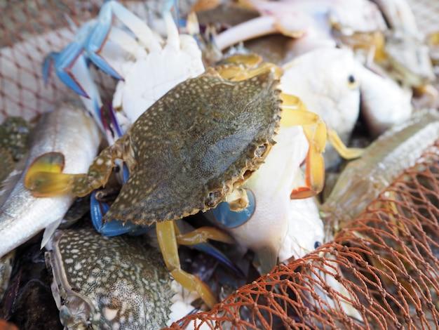 Frisch gefangene blaue krabben im netz.