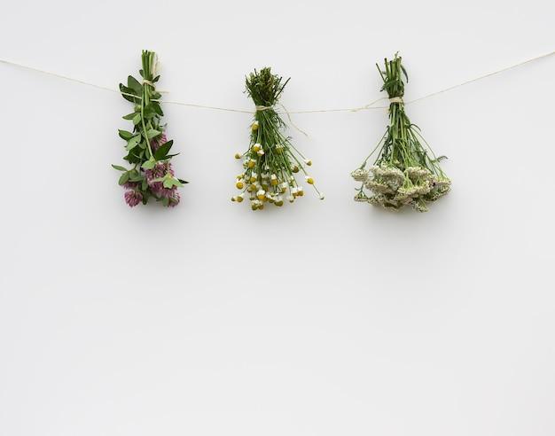 Frisch gepflückte heilkräuter hängen auf weißem hintergrund
