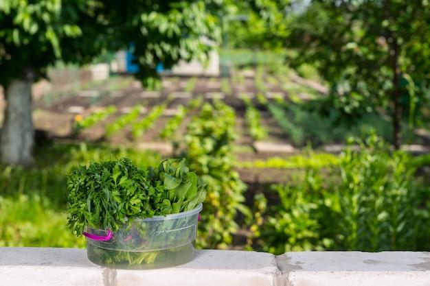 Frisch gepflücktes grün im transparenten eimer auf der ziegelmauer, die an den gemüsegarten grenzt