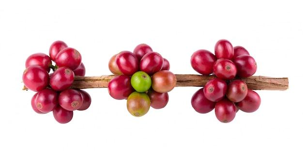 Frische arabica-kaffeebohnen, die lokalisiert auf weißem hintergrund reifen