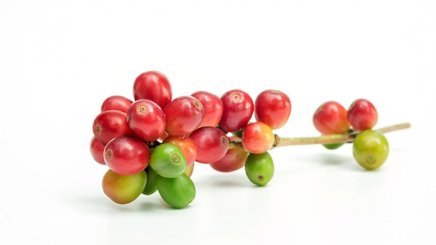 Frische arabicakaffeebohnen auf weißem hintergrund.