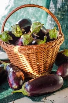 Frische auberginen in einem korb, eine neue ernte hautnah