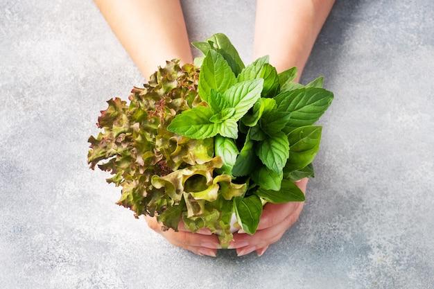 Frische basilikumblätter, minze und salat. ein bouquet aus duftenden kräutern und gewürzen und frauenhänden.