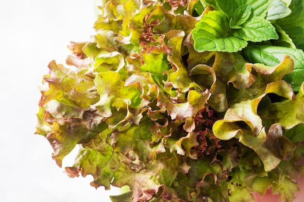 Frische basilikumblätter, minze und salat. ein bouquet aus duftenden kräutern und gewürzen.