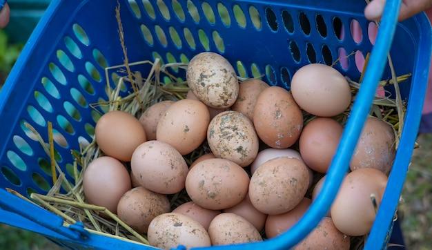 Frische bio-eier in einem korb werden nicht gereinigt.