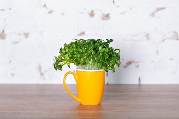 Frische blätter einer kaffeepflanze in der gelben tasse. gekeimte kaffeesprossen, frische natürliche grüne blätter, topfpflanze. kaffee im garten zu hause züchten. konzept der gesunden ernährung. grüne sprossen in der tasse.