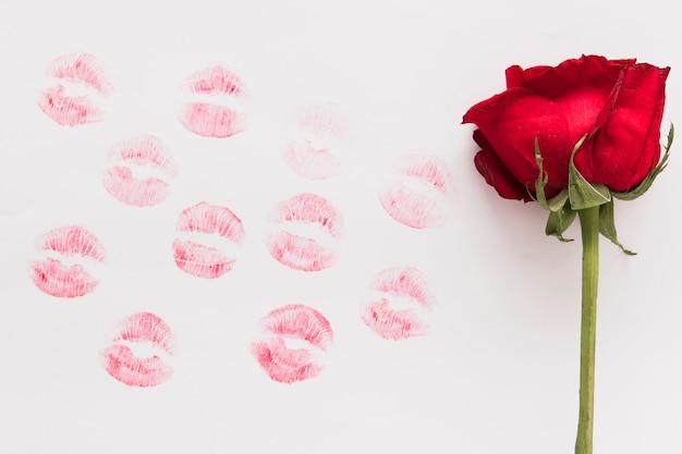 Frische blumen- und lippenstiftküsse auf papier