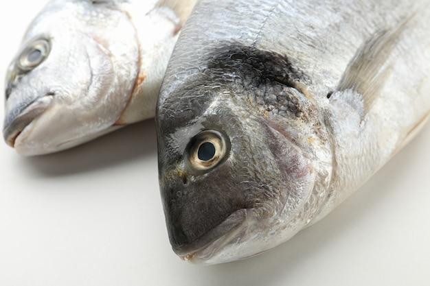 Frische dorado-fische auf weiß
