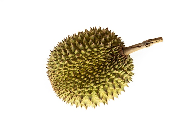 Frische durianfrucht auf weißem hintergrund