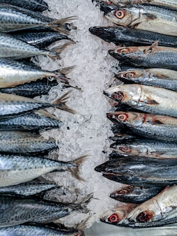 Frische einfrierende makrele im markt