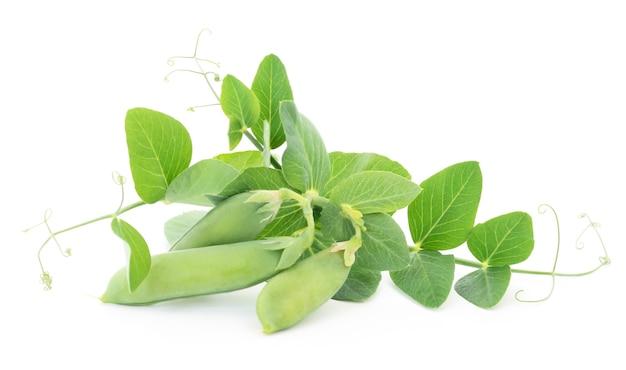 Frische erbsenfrucht mit grünen blättern auf einem weißen hintergrund.