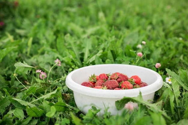 Frische erdbeere in der schüssel im garten sommer-kopienraum des grünen grases im freien