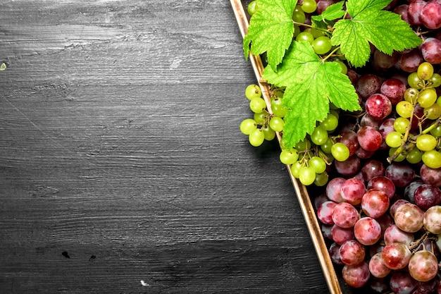 Frische ernte von roten und grünen trauben auf tablett
