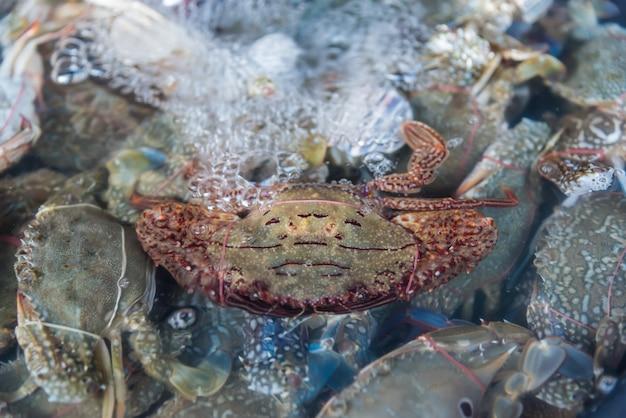 Frische erstklassige qualität der seeblumenkrabbe (portunus pelagicus) anzeige für verkauf