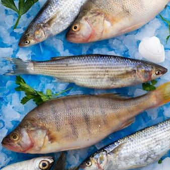 Frische fische der nahaufnahme mit kiemen