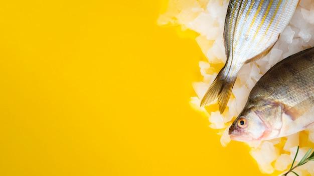 Frische fische, die auf eiswürfel legen