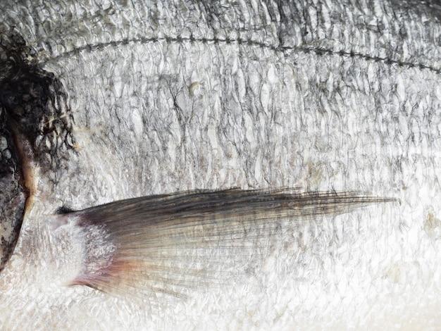 Frische fischschuppen der nahaufnahme mit kiemen