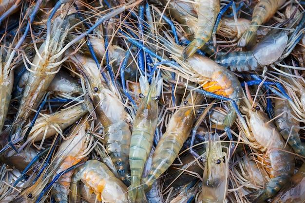 Frische flussgarnele mit vielen eiern im meeresfrüchtemarkt