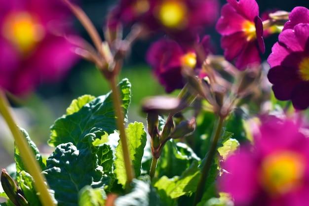 Frische frühlingsblumen wachsen im garten