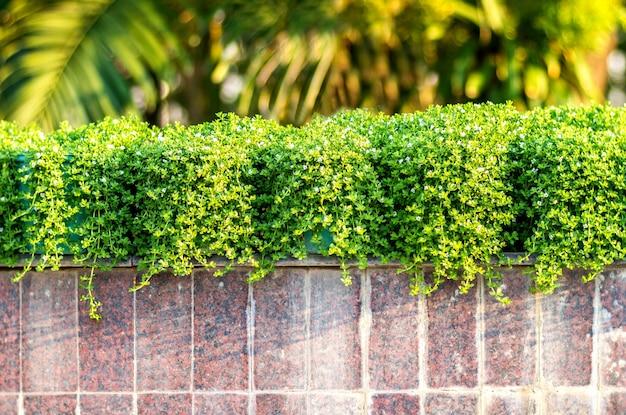 Frische frühlingspflanze der grünen blätter und der blumen über backsteinmauerhintergrund