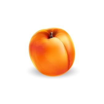 Frische ganze aprikose auf weißem hintergrund. realistische stilillustration.