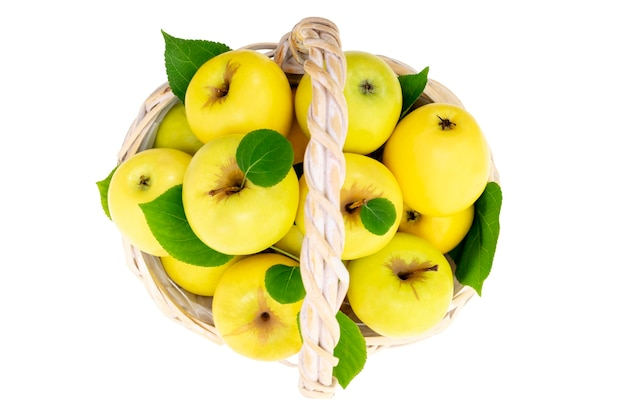 Frische gelbe äpfel im weidenkorb, isoliert auf weiss. sommer- oder herbsternte von reifen früchten.