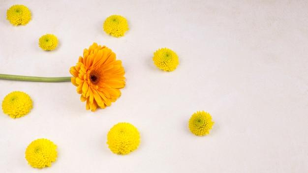 Frische gelbe blütenknospen und wunderbare blüte auf grünem stamm