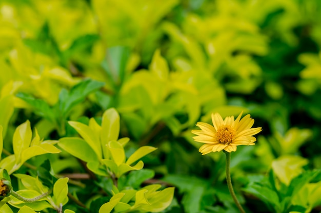 Frische gelbe blume auf grünem hintergrund